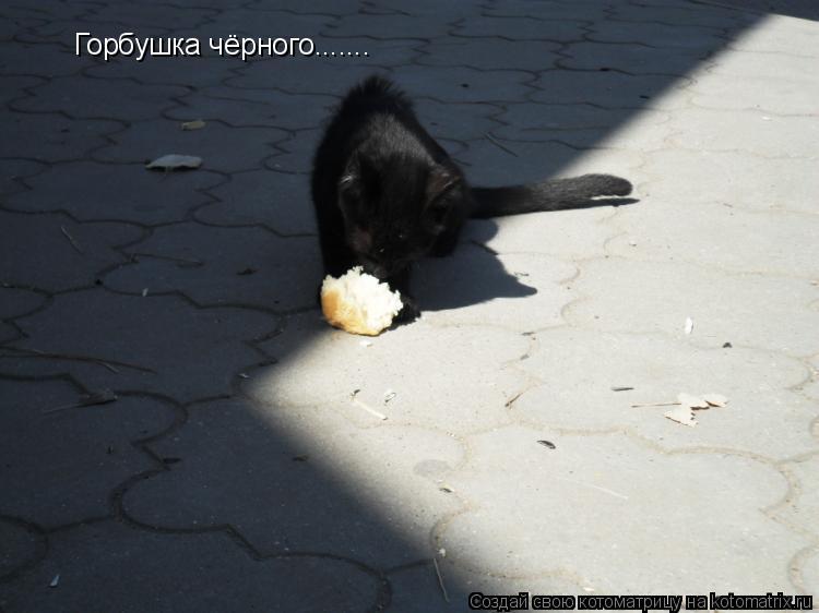 Котоматрица: Горбушка чёрного.......