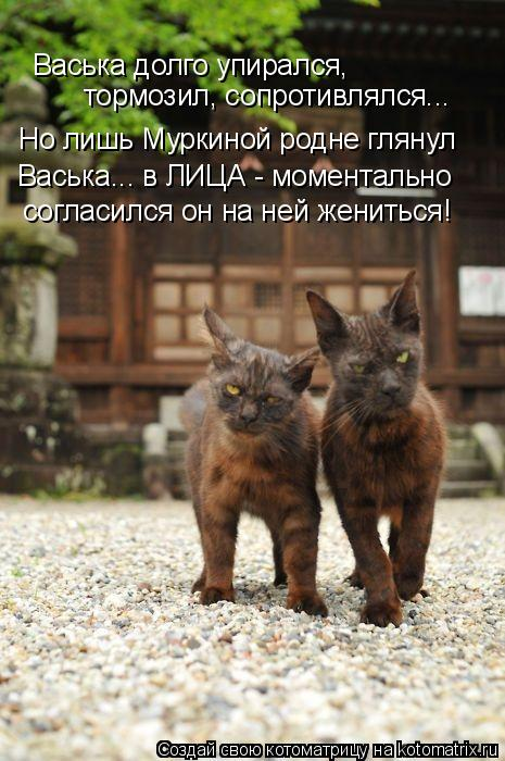 Котоматрица: Васька долго упирался, тормозил, сопротивлялся... Но лишь Муркиной родне глянул Васька... в ЛИЦА - моментально согласился он на ней жениться!