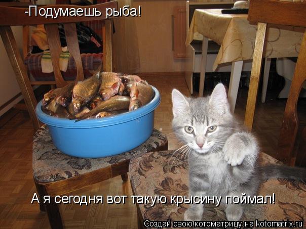 Котоматрица: -Подумаешь рыба! А я сегодня вот такую крысину поймал!