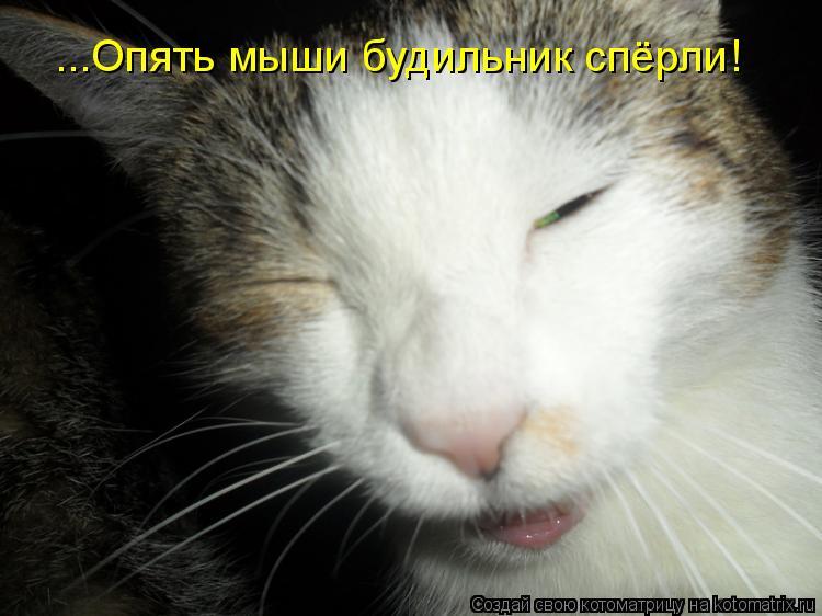 Котоматрица: ...Опять мыши будильник спёрли!