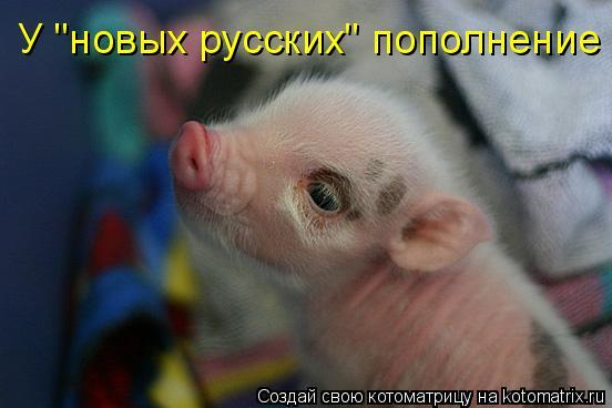 """Котоматрица: У """"новых русских"""" пополнение"""