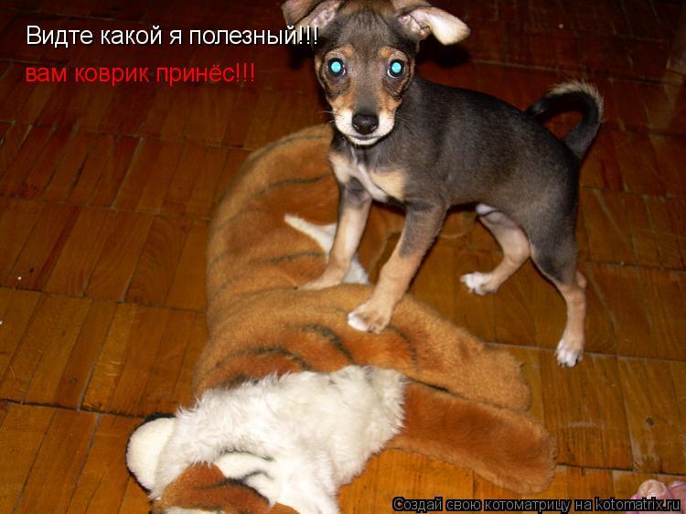 Котоматрица: Видте какой я полезный!!! вам коврик принёс!!!