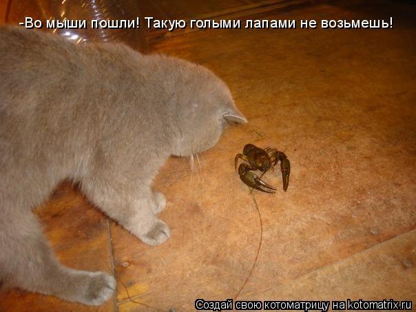 Котоматрица: -Во мыши пошли! Такую голыми лапами не возьмешь!