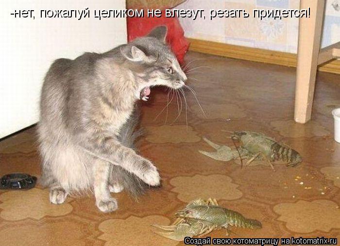 Котоматрица: -нет, пожалуй целиком не влезут, резать придется!