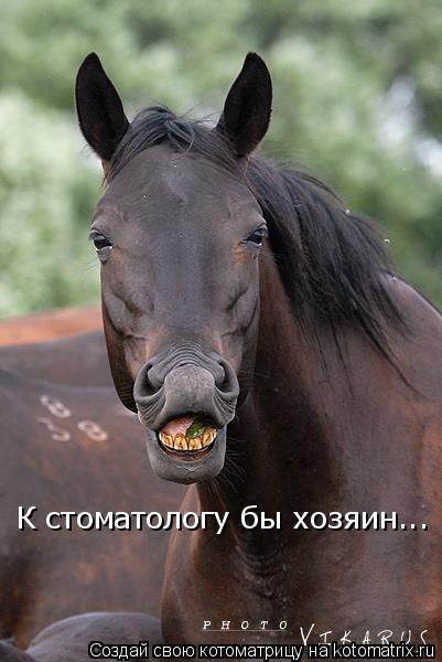 Котоматрица: К стоматологу бы хозяин...