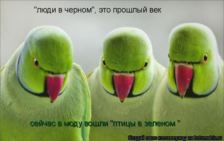 """Котоматрица: """"люди в черном"""", это прошлый век сейчас в моду вошли """"птицы в зеленом """""""