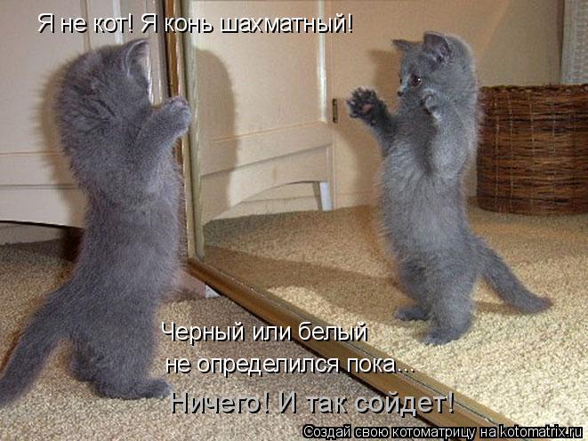 Котоматрица: Я не кот! Я конь шахматный! не определился пока Черный или белый ... Ничего! И так сойдет!