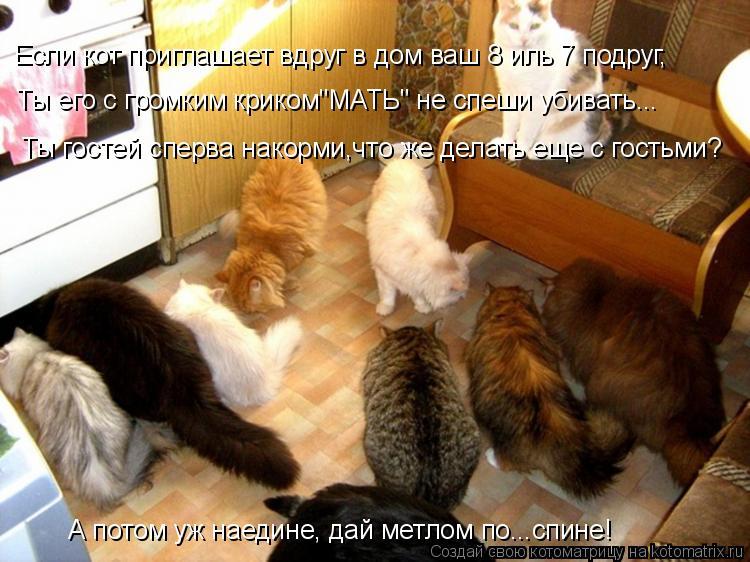 """Котоматрица: Ты гостей сперва накорми,что же делать еще с гостьми? Если кот приглашает вдруг в дом ваш 8 иль 7 подруг, Ты его с громким криком""""МАТЬ"""" не спеши"""