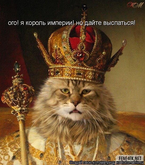 Котоматрица: ого! я король империи! но дайте выспаться!