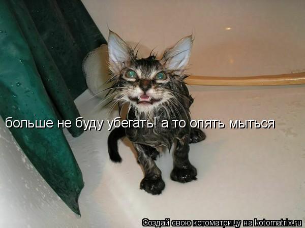 Котоматрица: больше не буду убегать! а то опять мыться