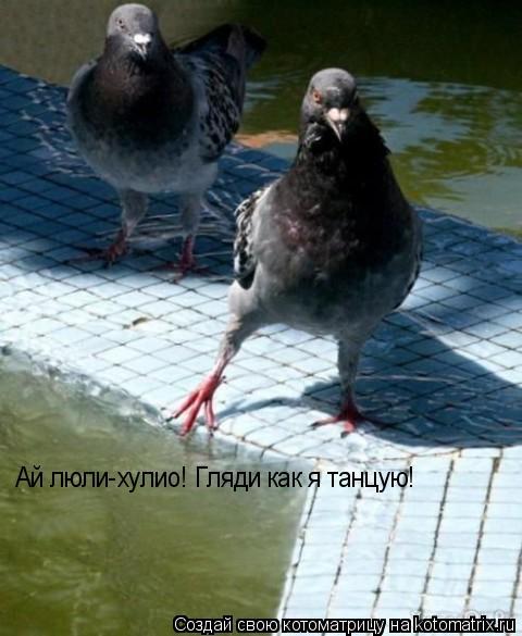 Котоматрица: Ай люли-хулио! Гляди как я танцую!