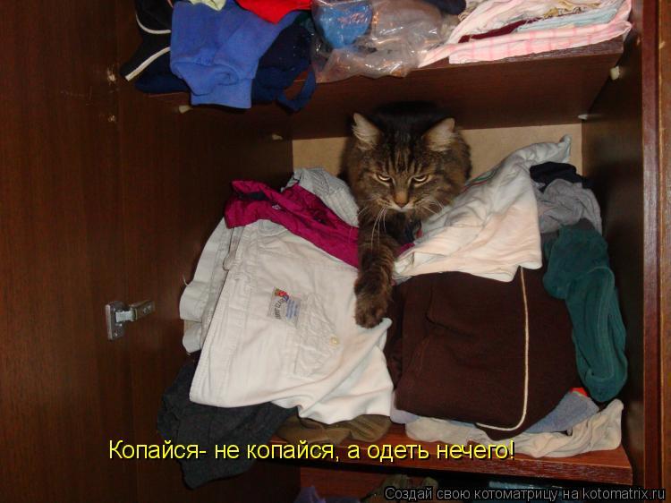 Котоматрица: Копайся- не копайся, а одеть нечего!