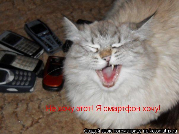 Котоматрица: Не хочу этот! Я смартфон хочу!