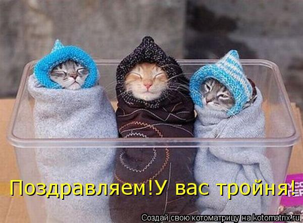 Котоматрица: Поздравляем!У вас тройня!