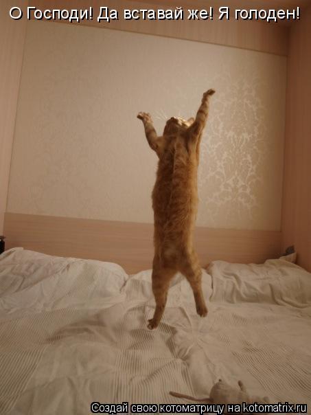 Котоматрица: О Господи! Да вставай же! Я голоден!