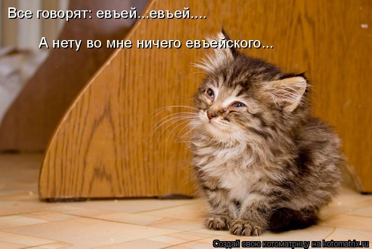 Котоматрица: Все говорят: евъей...евъей.... А нету во мне ничего евъейского...