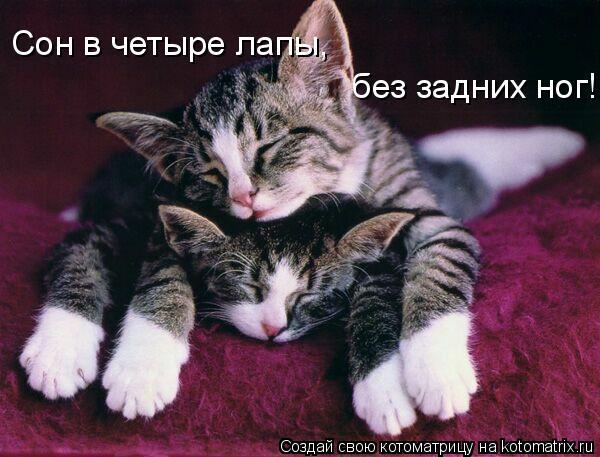Котоматрица: Сон в четыре лапы,  без задних ног!