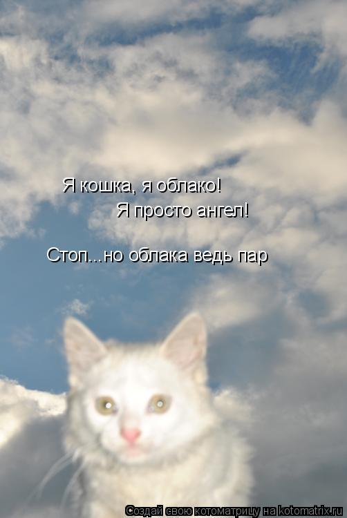 Котоматрица: Я кошка, я облако! Я просто ангел! Стоп...но облака ведь пар