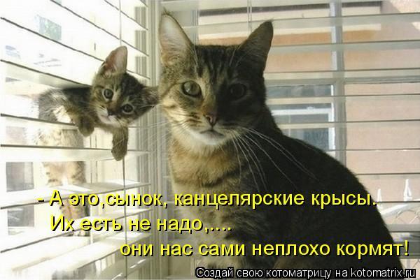 Котоматрица - - А это,сынок, канцелярские крысы. Их есть не надо,.... они нас сами н