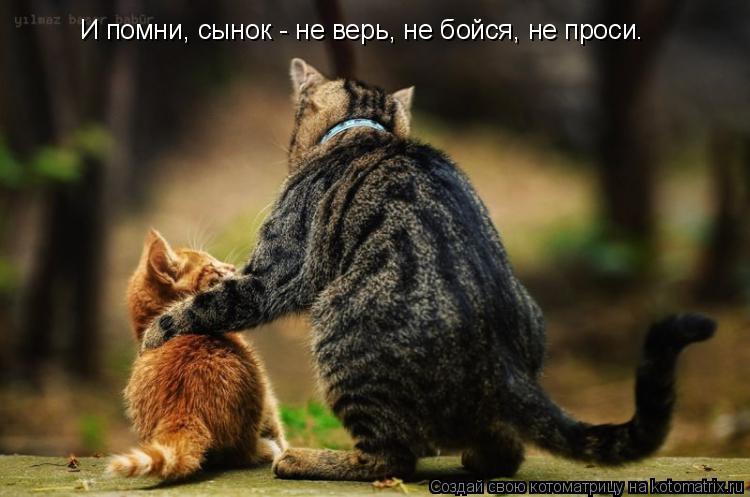 Котоматрица: И помни, сынок - не верь, не бойся, не проси.