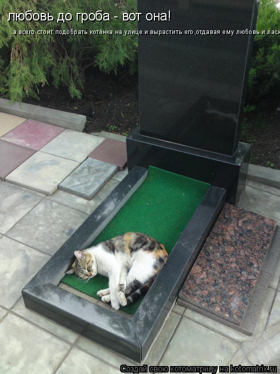 Котоматрица: любовь до гроба - вот она! а всего стоит подобрать котёнка на улице и вырастить его,отдавая ему любовь и ласку..