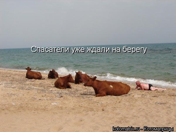 Котоматрица: Спасатели уже ждали на берегу