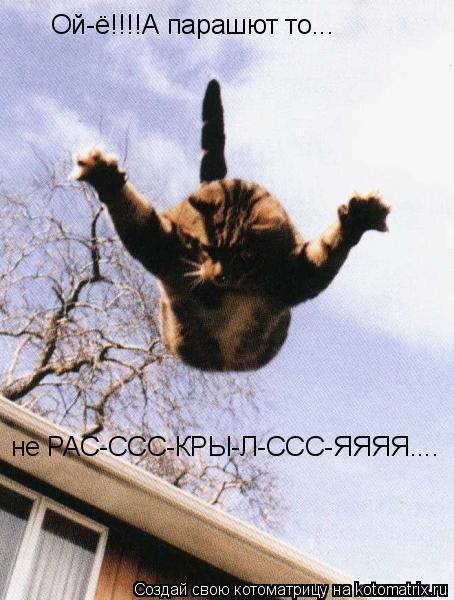 Котоматрица: Ой-ё!!!!А парашют то...  не РАС-ССС-КРЫ-Л-ССС-ЯЯЯЯ....