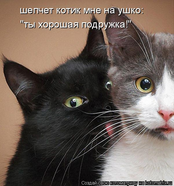 """Котоматрица: шепчет котик мне на ушко: """"ты хорошая подружка!"""""""