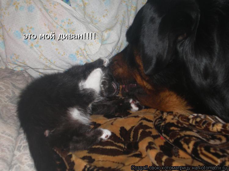 Котоматрица: это мой диван!!!!