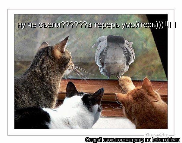Котоматрица: ну че съели??????а терерь умойтесь)))!!!!!
