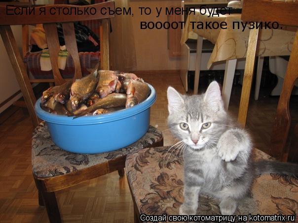 Котоматрица: Если я столько съем, то у меня будет  воооот такое пузико.