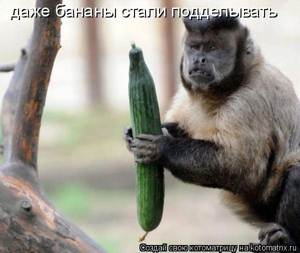Котоматрица: даже бананы стали подделывать