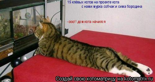 Котоматрица: 15 клёвых котов на проекте кота  с нами мурка собчак и сима бородина - ооо!! дом кота начился