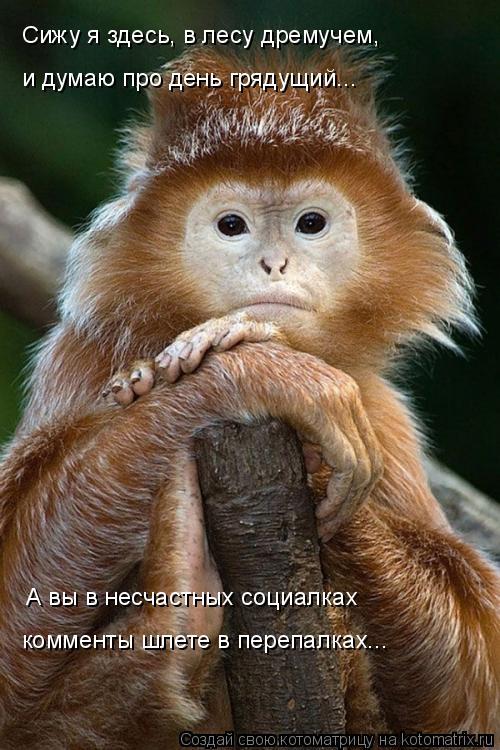 Котоматрица: Сижу я здесь, в лесу дремучем, и думаю про день грядущий... А вы в несчастных социалках комменты шлете в перепалках...