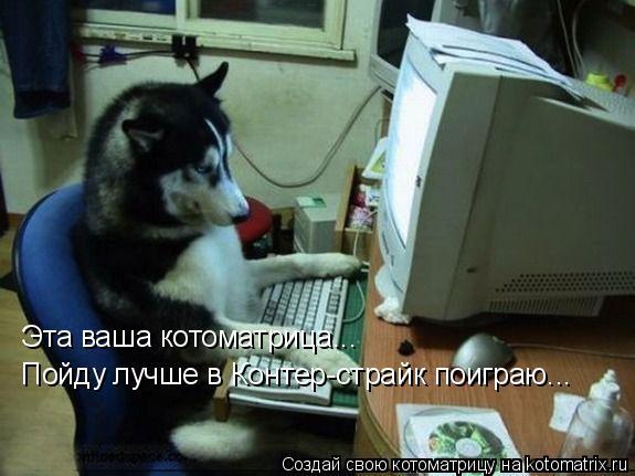 Котоматрица: Эта ваша котоматрица... Пойду лучше в Контер-страйк поиграю...