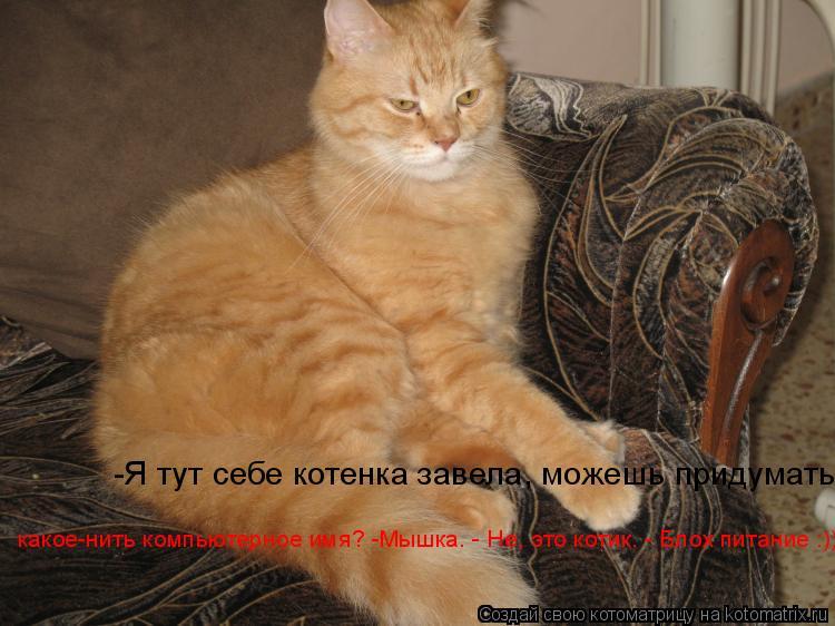Котоматрица: -Я тут себе котенка завела, можешь придумать какое-нить компьютерное имя? -Мышка. - Не, это котик. - Блох питание :))) какое-нить компьютерное им