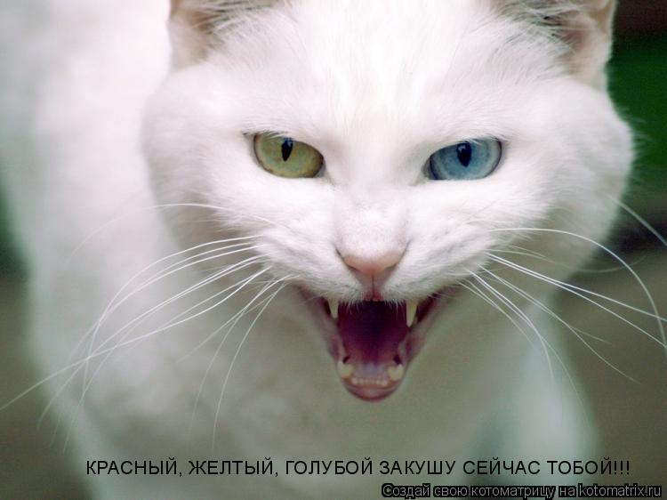 Котоматрица: КРАСНЫЙ, ЖЕЛТЫЙ, ГОЛУБОЙ ЗАКУШУ СЕЙЧАС ТОБОЙ!!! КРАСНЫЙ, ЖЕЛТЫЙ, ГОЛУБОЙ ЗАКУШУ СЕЙЧАС ТОБОЙ!!!