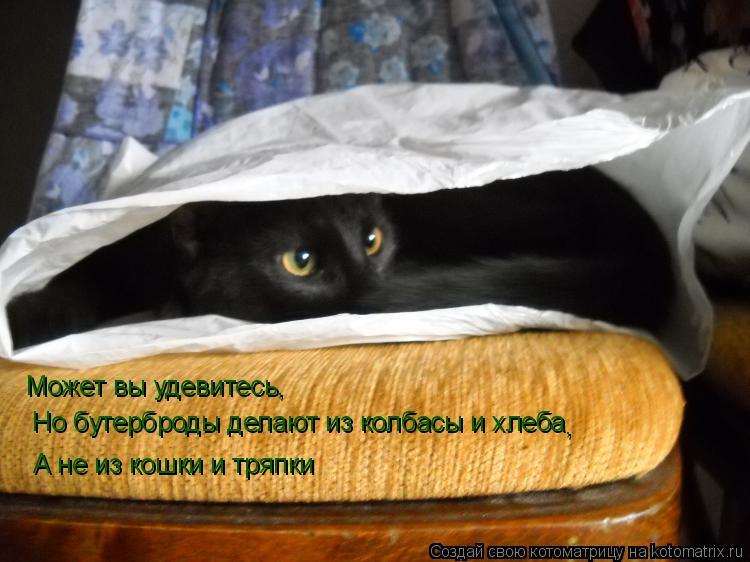 Котоматрица: Может вы удевитесь, Но бутерброды делают из колбасы и хлеба , А не из кошки и тряпки