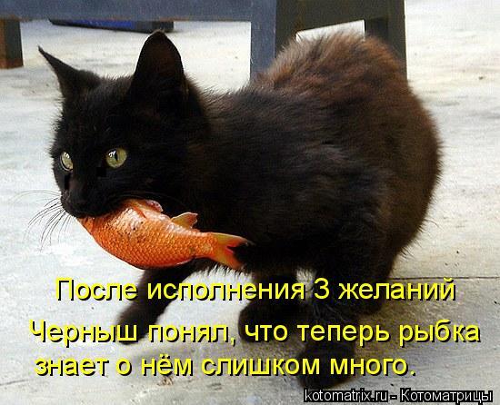 Котоматрица: После исполнения 3 желаний  Черныш понял, что теперь рыбка знает о нём слишком много.