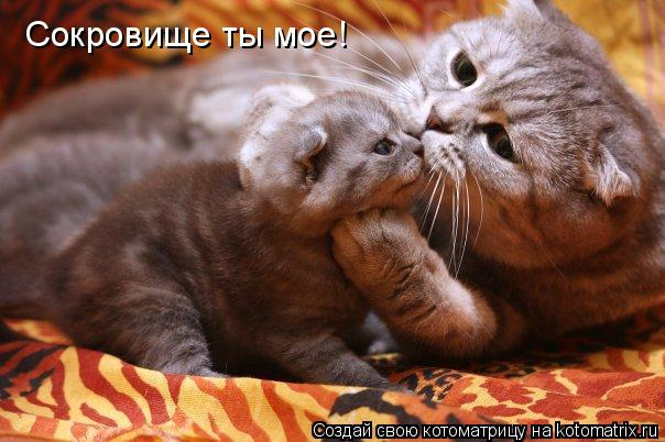Котоматрица: Сокровище ты мое!