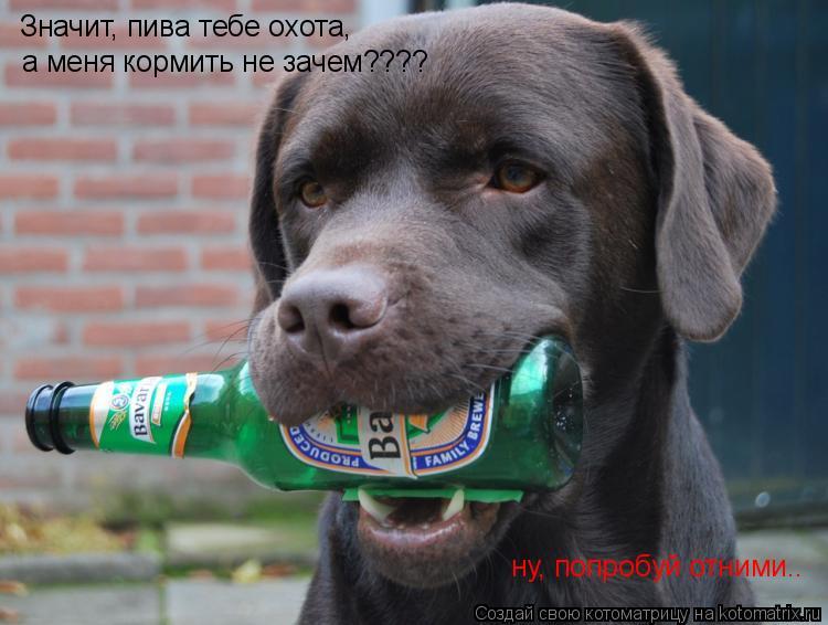 Котоматрица: Значит, пива тебе охота,  а меня кормить не зачем???? ну, попробуй отними..