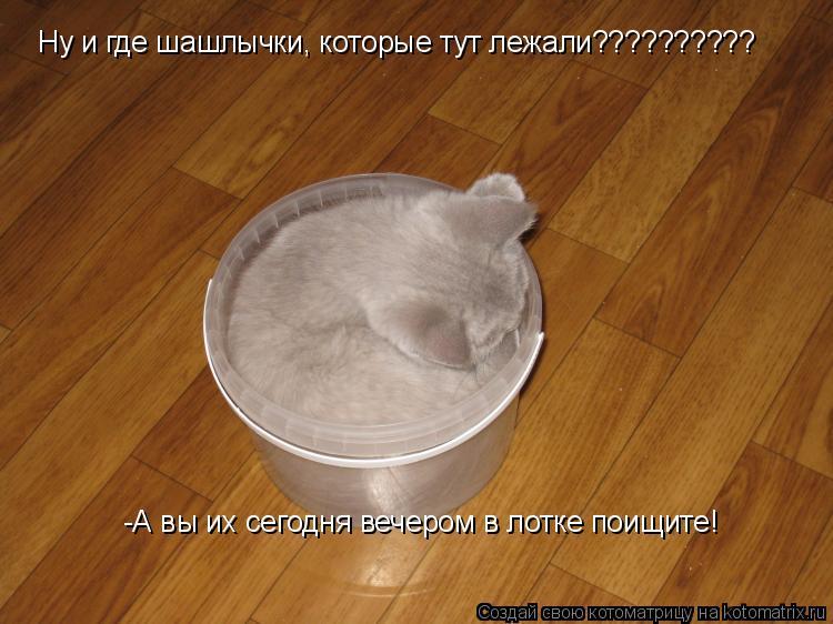 Котоматрица: Ну и где шашлычки, которые тут лежали?????????? -А вы их сегодня вечером в лотке поищите!