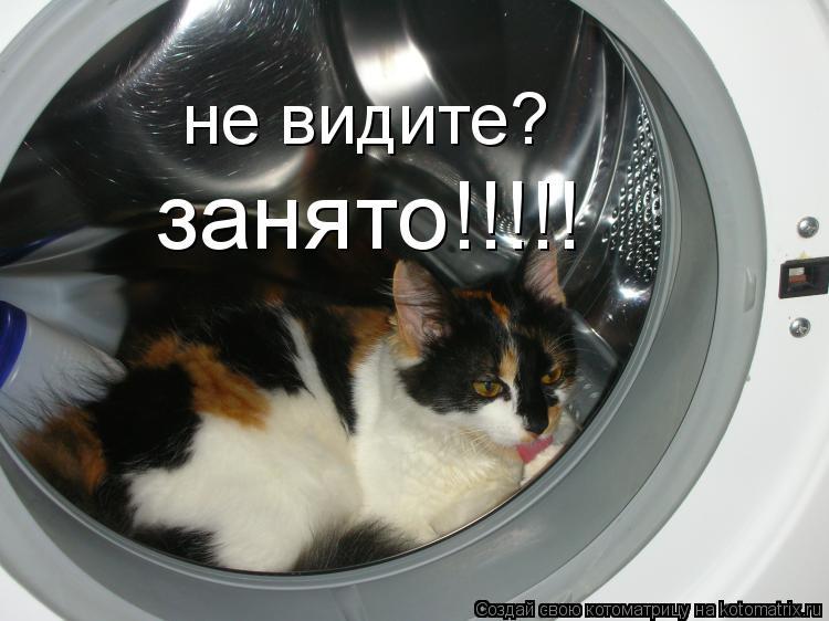 Котоматрица: не видите? занято!!!!!