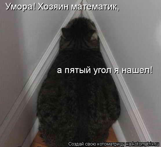Котоматрица: Умора! Хозяин математик, а пятый угол я нашел!