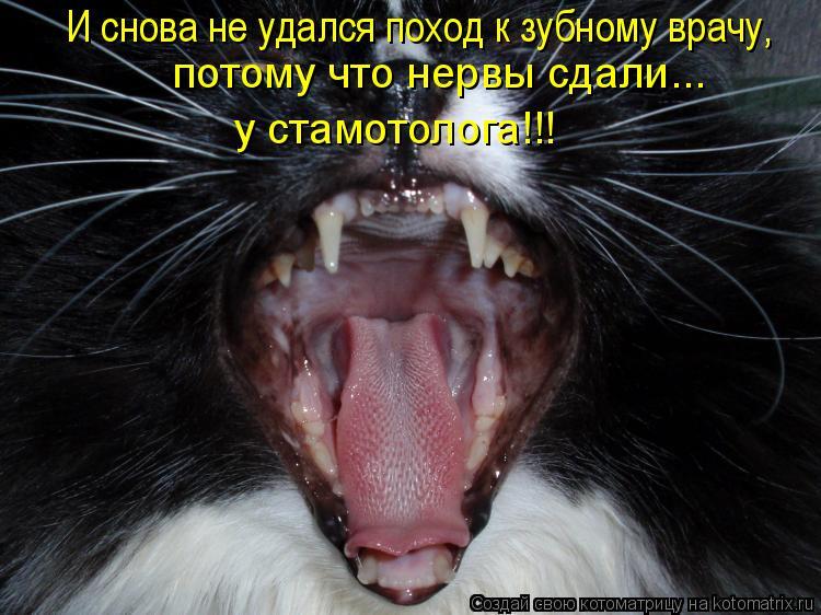 Котоматрица: И снова не удался поход к зубному врачу, потому что нервы сдали... у стамотолога!!!