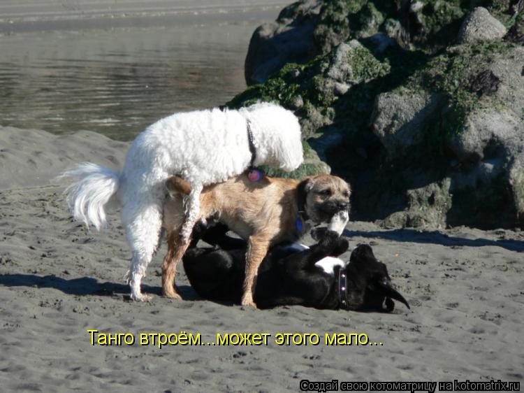 Котоматрица: Танго втроём...может этого мало...