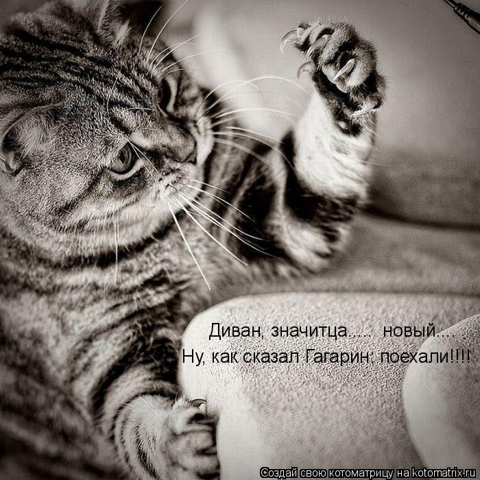 Котоматрица: Ну, как сказал Гагарин: поехали!!!! Диван, значитца.....  новый....