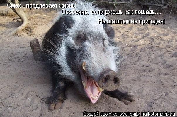 Котоматрица: Смех - продлевает жизнь!  Особенно, если ржешь как лошадь....  На шашлык не пригоден!