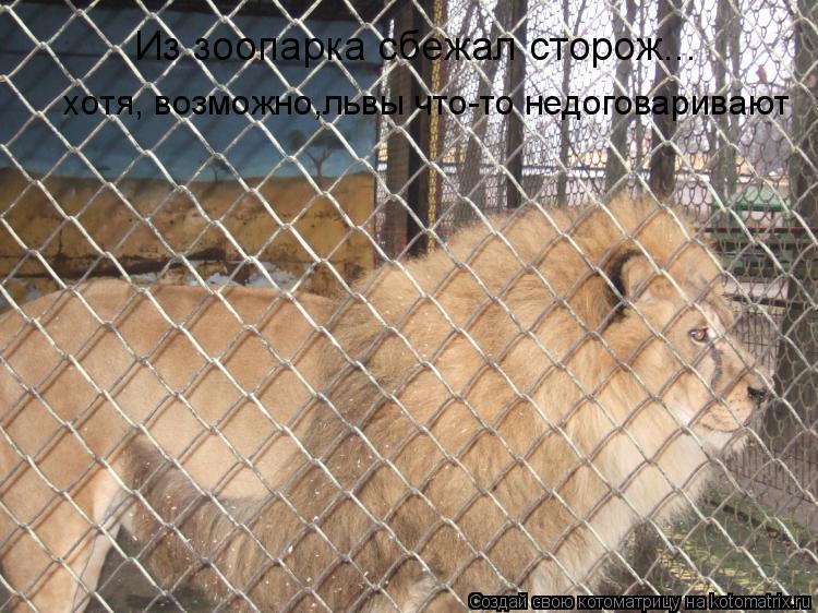 Котоматрица: Из зоопарка сбежал сторож...   хотя, возможно,львы что-то недоговаривают