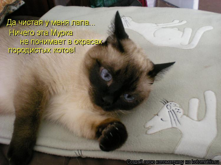 Котоматрица: Да чистая у меня лапа... Ничего эта Мурка не понимает в окрасах породистых котов!